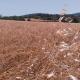 Sarı Buğday Unu